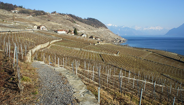 Lavaux Vineyards - Lac Léman (Lake Geneva) Area - UNESCO World Heritage