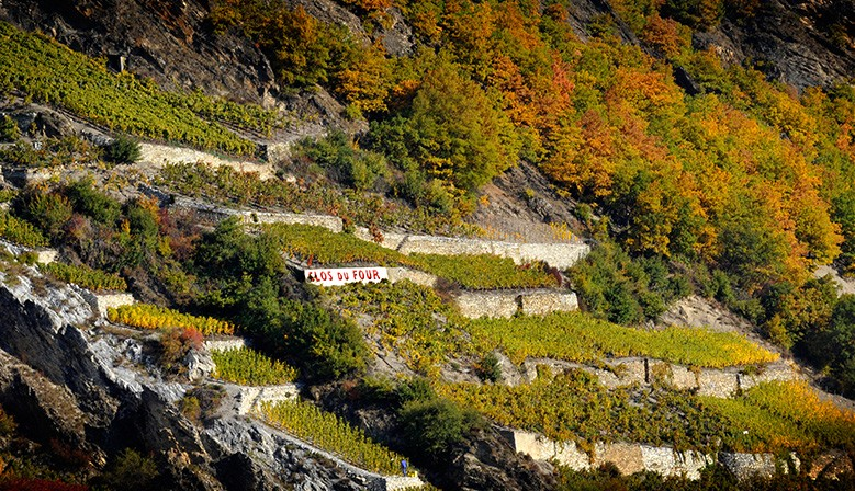 Valais Vineyards - Swiss Alps Area - Vétroz