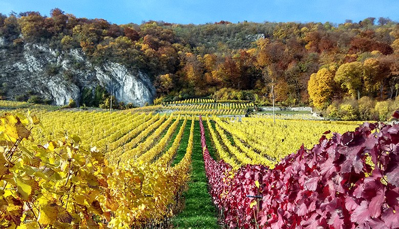 Three Lakes Vineyards - Biel/Bienne Area