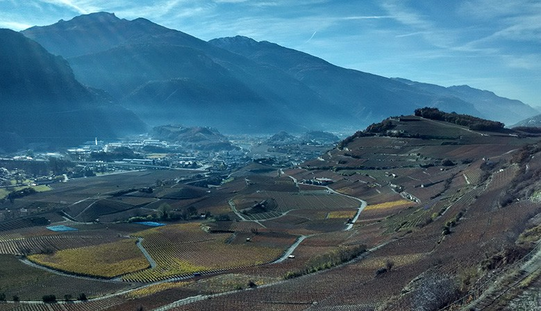 Valais Vineyards - Swiss Alps Area - Miège
