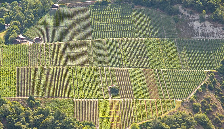 Steep Valais Vineyards - Swiss Alps Area